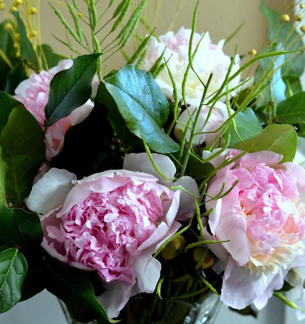 peonies, flowers, farmers market