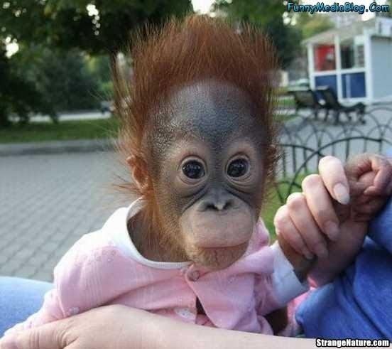 hilarious monkeys - photo #10