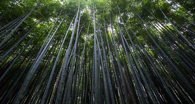 Pelestarian Lingkungan Hidup dan Pengelolaan Sumber Daya Alam Berkelanjutan