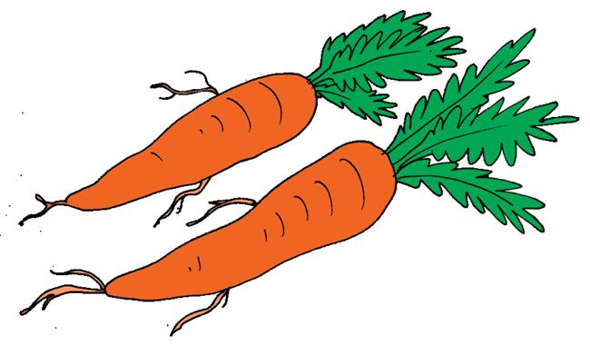 Sayuran termasuk daftar makanan yang harus dikonsumsi setiap hari Laporan Pengamatan Bacaan Teks Mengenal Wortel