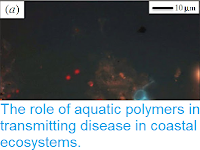 http://sciencythoughts.blogspot.co.uk/2014/10/the-role-of-aquatic-polymers-in.html