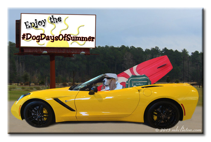 Basset Hound driving yellow Vette with overnight bag and surf board