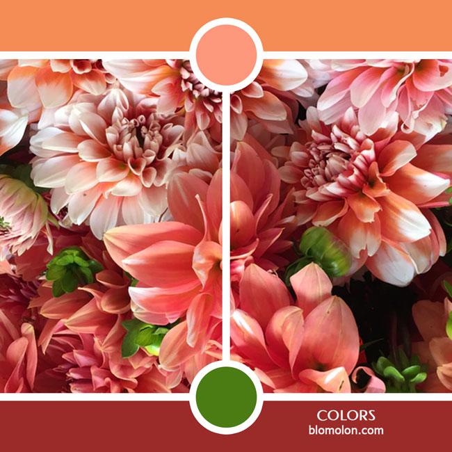 variedad_en_color_color_22