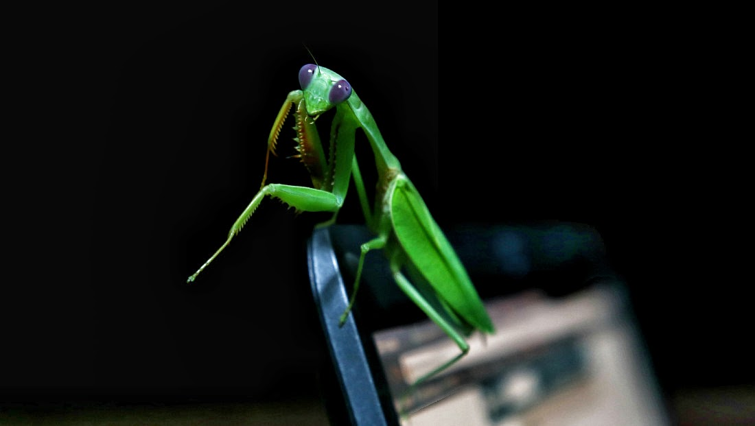 каких насекомых можно встретить на Филиппинах