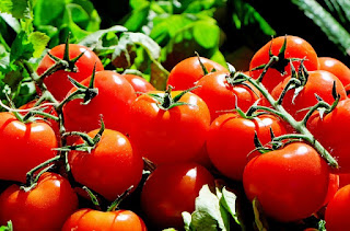 eat tomatoes to combat your cancer