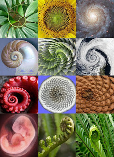 Spirala natura galaktyka słonecznik liście chmury muszla embrion dmuchawiec szyszka ośmiornica