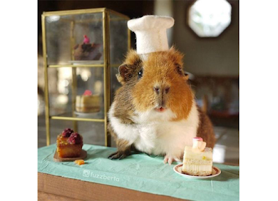 Guinea Pig Treat Recipes