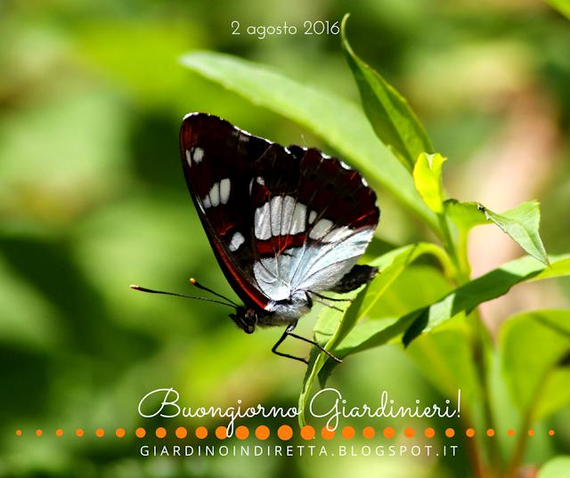 farfalle - il giardino dalla A alla Z - un giardino in diretta