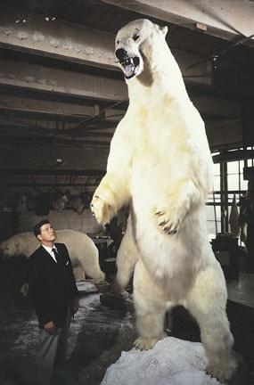 اعلى انواع الدببة في العالم
