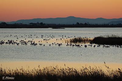 Llacuna de l'Encanyissada, en el Delta del Ebro