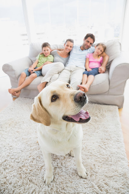 Dog And Family Enjoying HEating and Air Conditioning Service