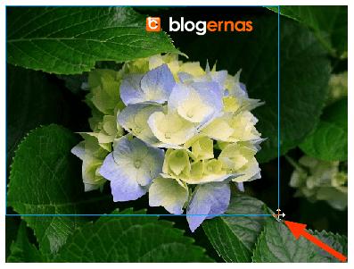 Cara Edit Ukuran Foto di Macromedia Freehand
