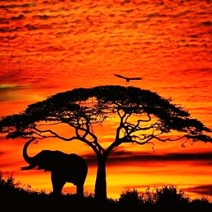 Amazing JPG: African Sunset