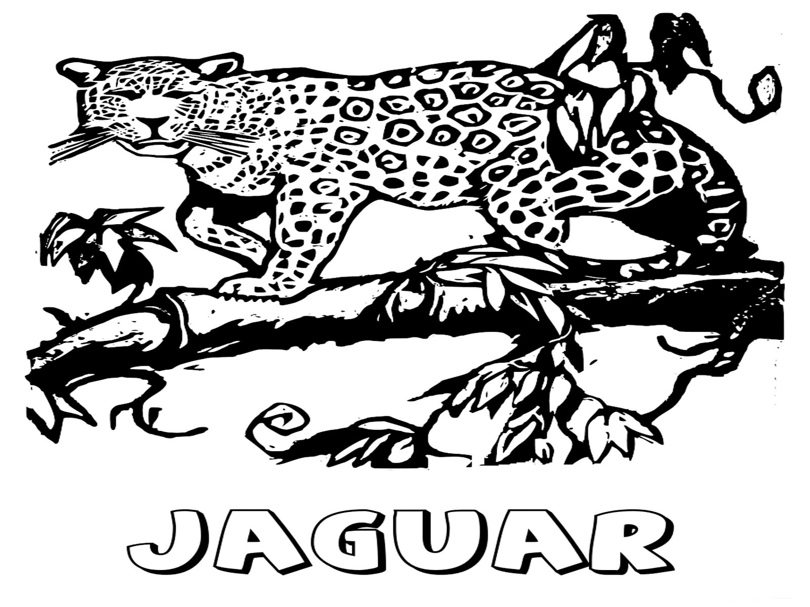 Jaguar animal coloring pages realistic coloring pages for Tapir coloring page