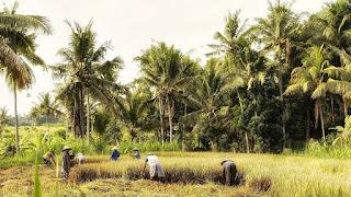 Zakat Mal Hasil Pertanian, Perniagaan dan Harta karun