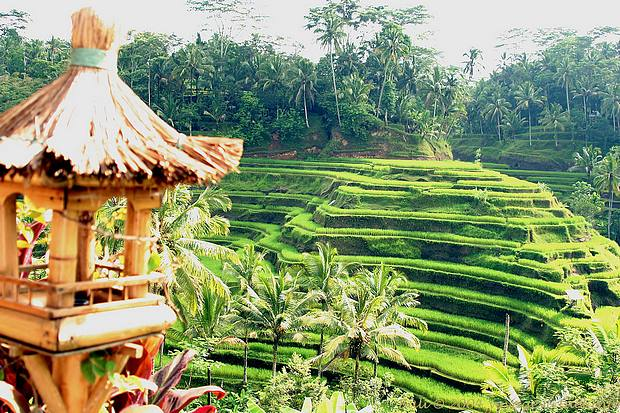 Objek Wisata Bali Tegallalang Tegallalang Gianyar