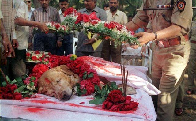 O cachorro que mais salvou vidas do mundo