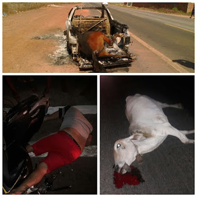 Animais na pista provocam dois acidentes em menos de 24 horas na BR-222 em Vargem Grande-MA