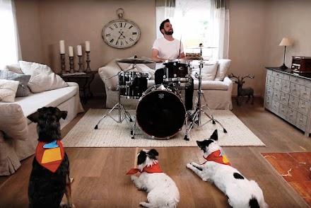 Status Quo Drummer Leon Cave füttert seine Hunde für Clean Master