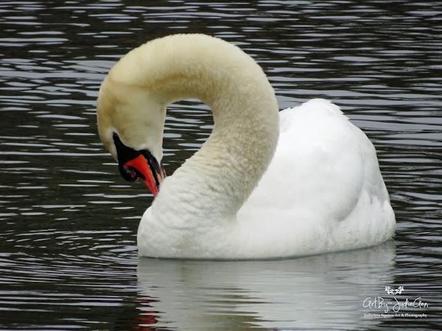 Swan image