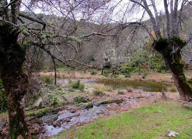 Arroyo de Gargantilla. Río Estena. Parque nacional de Cabañeros