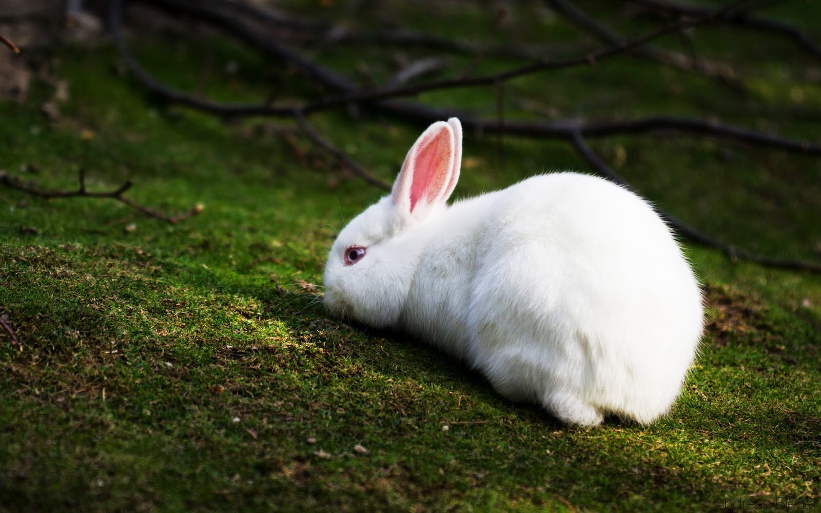 Lovable Images: Download Rabbits Pictures || Beautiful ...
