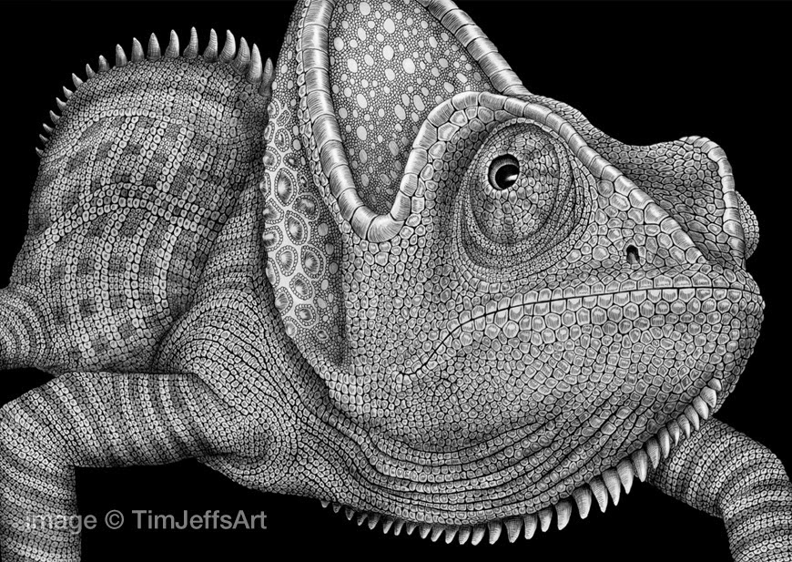 19-Chameleon-Tim-Jeffs-All-Creatures-Great-and-Small-Ink-Drawings-www-designstack-co