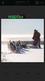 собаки в упряжке двигают нарты за собой с человеком