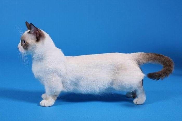 black midget Kitty