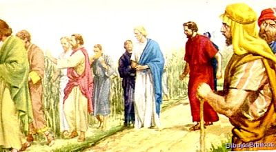 discípulos-espigan