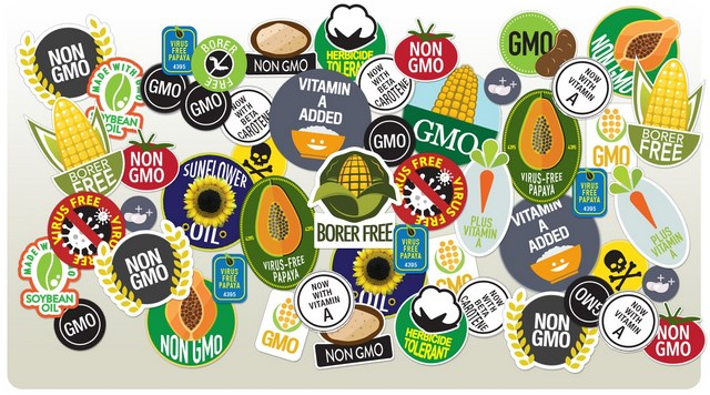 the danger of genetically modified organisms essay Order genetically modified foods essay from $12  derived from genetically modified organisms  focuses on their potential danger to the environment and the.