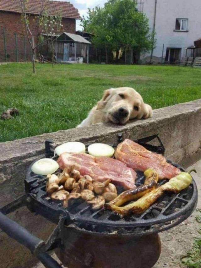 Cute dogs - part 263, dog image, funny dog picture, dog photos