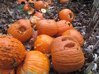Lots of pumpkins in a compost pile