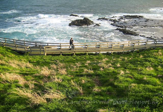 Philips Island 菲利浦島企鵝