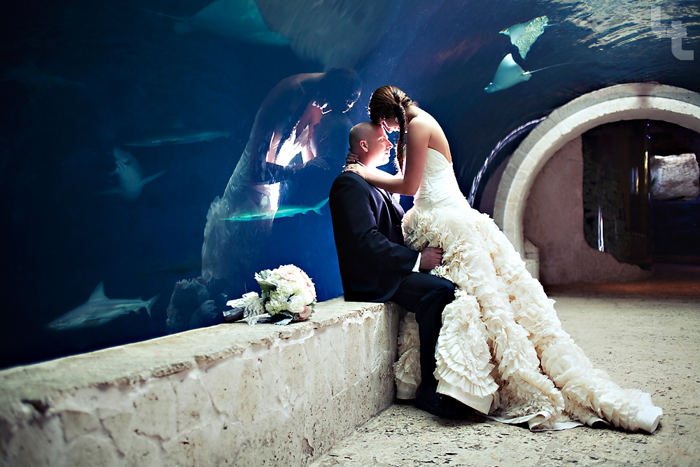 Lindsey Thorne Photography Dallas World Aquarium Wedding Calvin Aaron Teaser