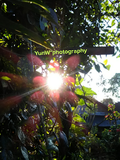 Sun Flare editing with cupslice