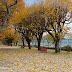 Jardim Público tem mais encanto no outono
