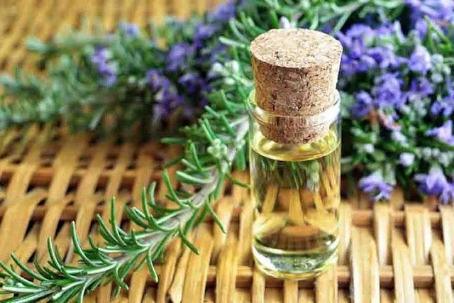 Tinh dầu hương thảo xua đuổi muỗi, côn trùng