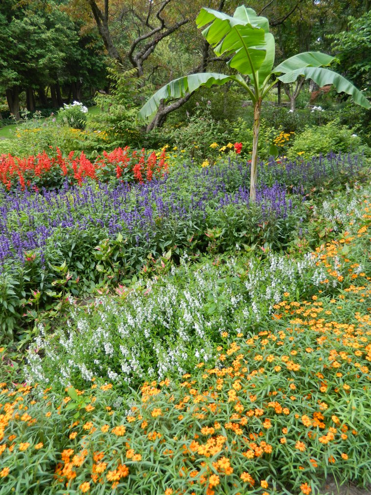 James Gardens layers annuals late summer by garden muses- a Toronto gardening blog