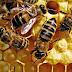 मधुमक्खी से जुडी जानकारियां