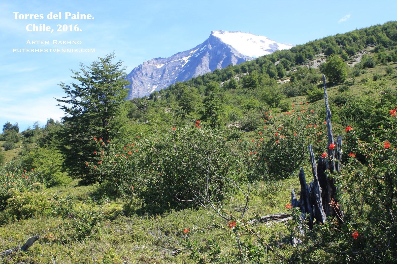 Склон горы в Торрес-дель-Пайне