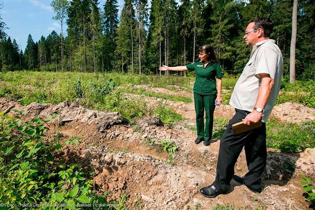 В Абрамцеве высадят почти 9 тысяч сеянцев ели и дуба