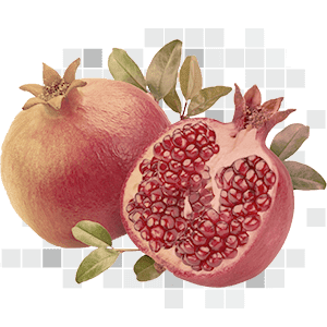 pomegranate 40% ellagic acid 500 mg
