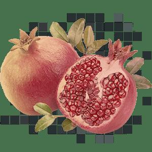 pomegranate 40% ellagic acid 500 mg