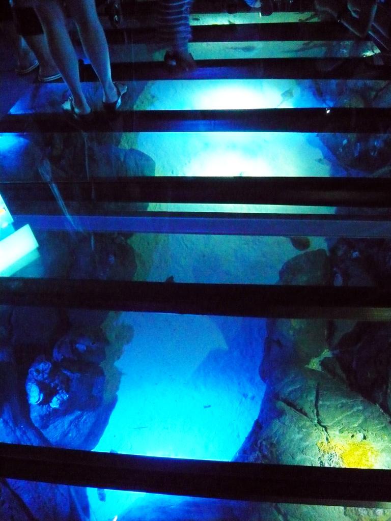 Shark tank floor