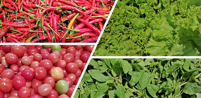 ปลูกผักไม่ใช้ยาฆ่าแมลง