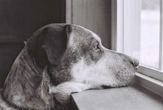 cão sozinho em casa