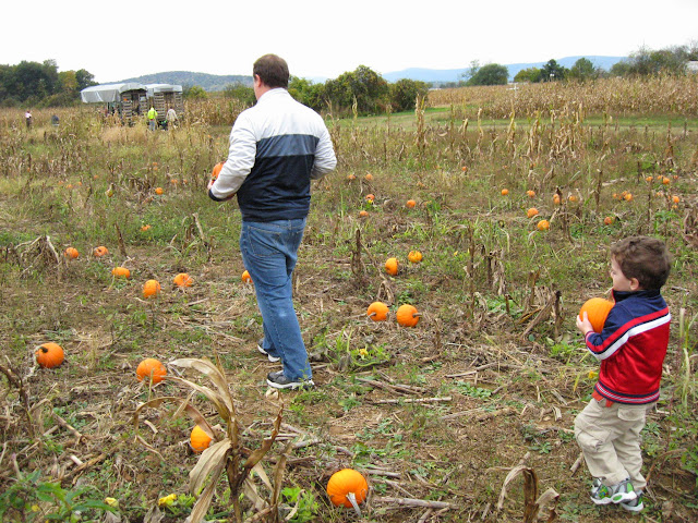 pumpkin picking at Hill High Farm in Winchester VA, Fall family fun in Northern Virginia,