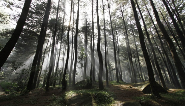 Pine Forest Pengger - Cheap Travel Package Yogyakarta