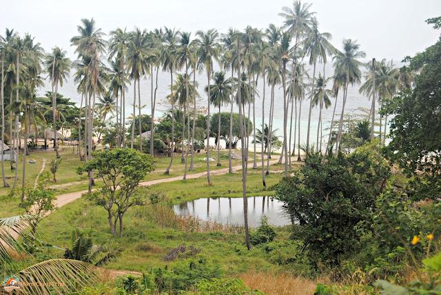 phi phi island, spiagge thailandia, spiagge incontaminate